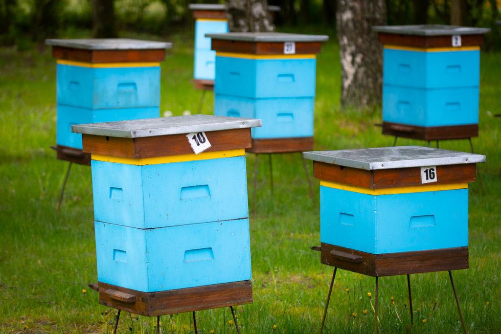 pszczele ule